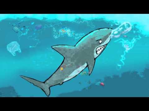 shark against plastic